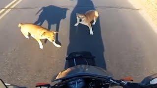 Animals VS Bikers!!! 2017 [Ep.#09]