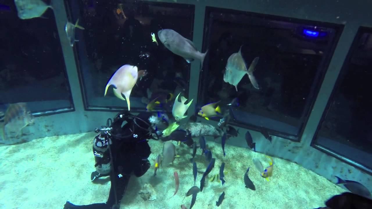 Mystic Aquarium Dive In T7 Youtube