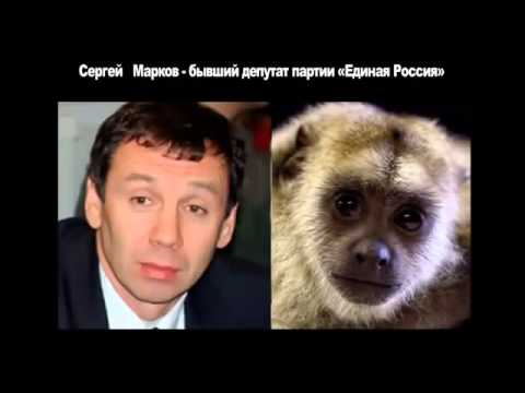Юмор  Забавные сходства  Политики России  Прикольные фото  Смешное видео 2