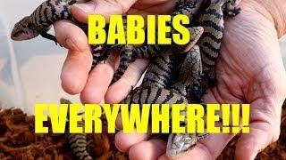 BABIES EVERYWHERE!!!