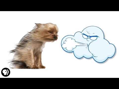What is Wind? | It's Okay to be Smart | PBS Digital Studios