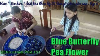 """Flower """"bean"""" a miracle flower !!! make the youth coil! episode 1"""