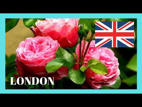 Exotic Rose Gardens at Regent's Park, London