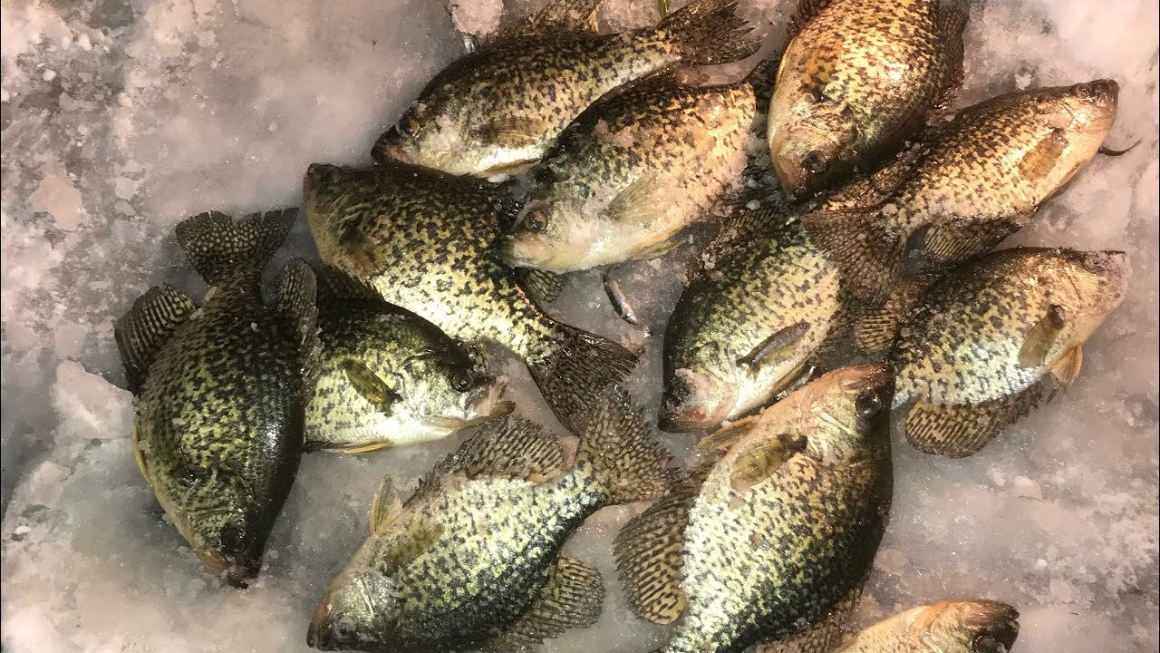 Late ice fishing crappie