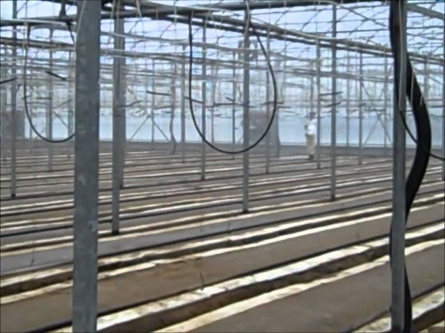 Grow Tomatoes: greenhouse preparation.