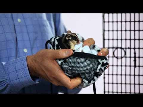 What Are the Best Sugar Glider Accessories? | Sugar Gliders