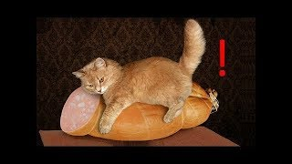 Funny Baby Animals Compilation - Cutest Animals Ever