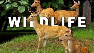 Download WILDLIFE IN 4K (ULTRA HD) 60fps 3Gp Mp4