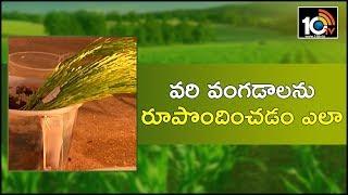 వరి వంగడాలను రూపొందించడం ఎలా | Farmer Get Best Profits with MTU 1262 Seed Cultivation| Matti Manishi