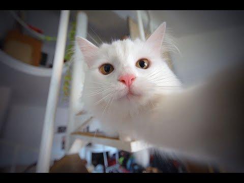 ТАГ : Моят домашен любимец 😻  / Pet Tag