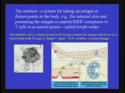 The Necessity of the Immune System