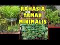 # TIS # Cara Tanam Lahan Sempit Untung Besar |Sawi,Cabe,Tomat,Terong |Growing Plant in Narrow Land