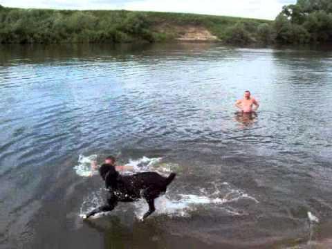 калужская рыбалка на оке видео