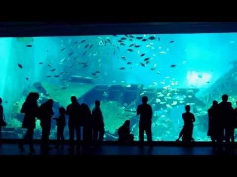 Large Aquarium in Hot Singapore of Asia