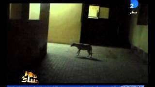 برنامج العاشرة مساء كلاب وقطط وحيوانات ضالة بمستشفى حكومى
