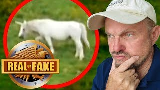 "ARE UNICORNS REAL? + 4 more ""Real or Fake?"" Pictures"