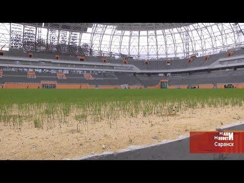 На стадионе «Мордовия Арена» агрономы вырастили первый газон