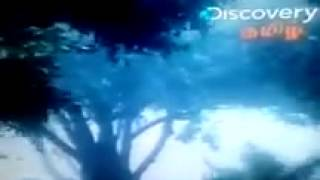 destroyed in seconds - natural disasters - discovery tamil
