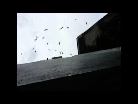 Opening Rumah Burung Walet Kang Mas Kelod