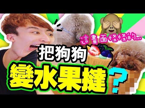 淘寶開箱:把狗狗變成「水果撻」?