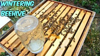 Wintering Bees & Got Mice in a Beehive