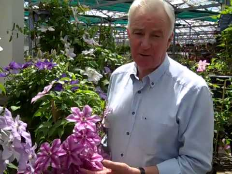 Raymond Evison Talks About Some Of His Favorites