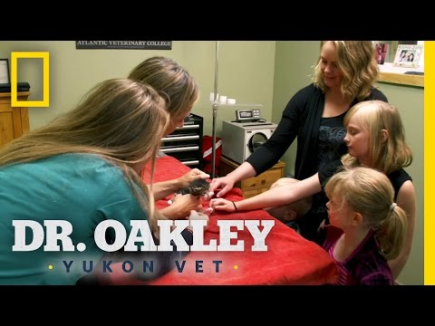 Kids and Kitties | Dr. Oakley, Yukon Vet