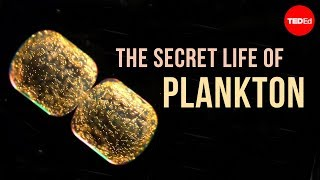 The secret life of plankton - Tierney Thys