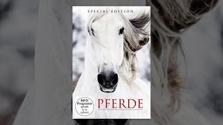 Pferde - Das Leben der Pferde in einzigartigen Aufnahmen