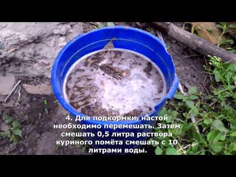 Как приготовить к поливу куриный помет