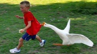 Les animaux les plus drôles échouent! - ESSAYEZ DE NE PAS RALLIER LE DÉFI!