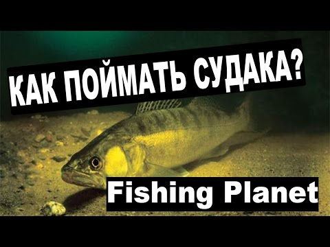 светлоперый судак на что ловить fishing planet