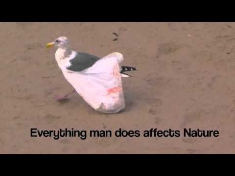 Seagull Caught in Plastic Bag