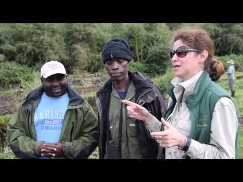 Cleveland Metroparks Zoo: Gorillas in Rwanda
