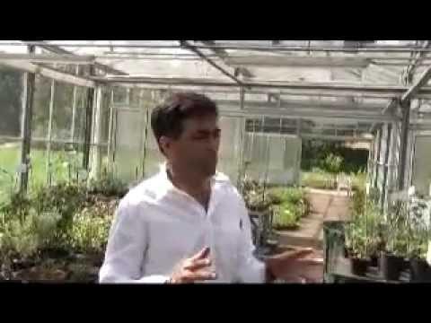 Exotischer Kräutergarten Des Dr. A. Moshiri
