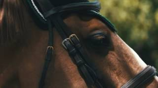 ||Symphony|| Equestrian Music Video