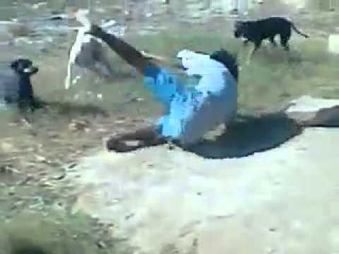 Um bebado lutando com cachorros