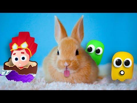 ЧАСОВОЙ СБОРНИК - Яйца Сюрприз. Обзор на игрушки Фиксики, игрушки Маша и Медведь и других героев