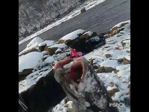рыбалка на реке ульма
