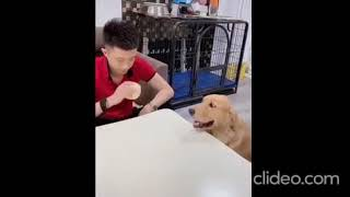 Funny of animals
