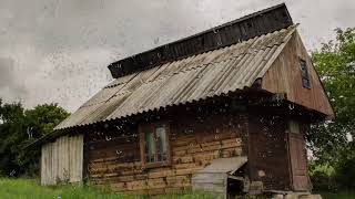 Rain Sounds on a Tin Roof (No Thunder) for Sleeping, Relaxing, Insomnia, Soothing a Baby or Study