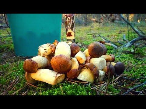 Вот это грибы. Польские грибы баночного размера.