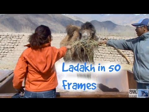 Leh Ladakh Travel Video