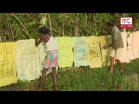 farmers in medirigir|eng