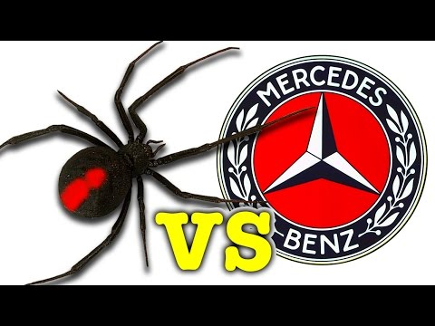 Scary Redback Spider Vs Mercedes Benz You Won't Believe What I Caught!