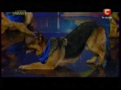 Украина мае талант 4 коллекстив чокс.mov