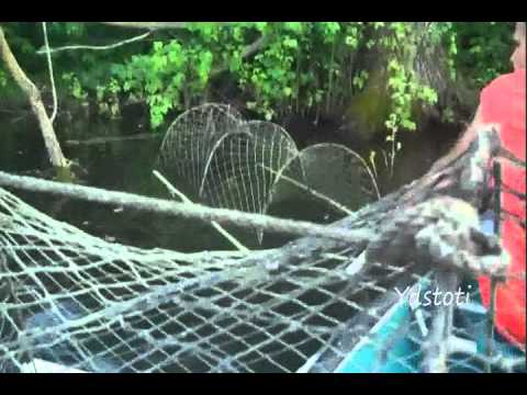 Trapping Snapping Turtles  With Hoop Nets