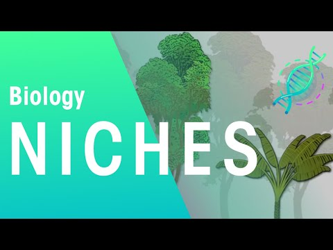 What is a niche? | Ecology and Environment | the virtual ...