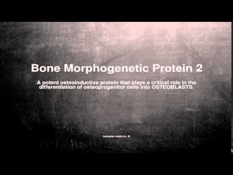 Medical vocabulary: What does Bone Morphogenetic Protein 2 mean