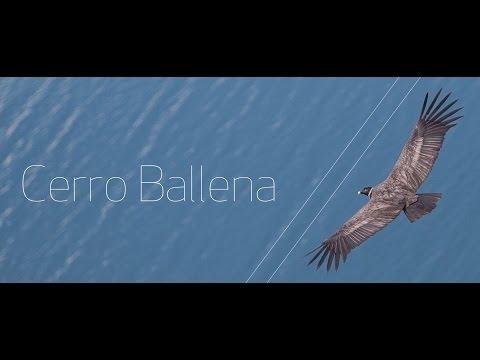 Cerro Ballena